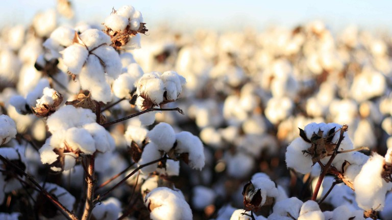 Cosustain Better Cotton